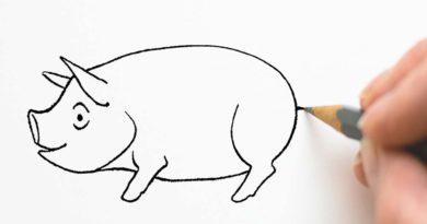 Rita svansen på grisen